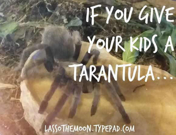 If you give your kids a tarantula - a funny story about parenting and God's sense of Humor.